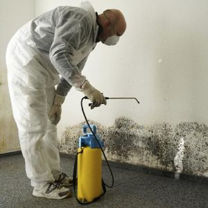 Mould and Mildew Remediation Chilliwack BC